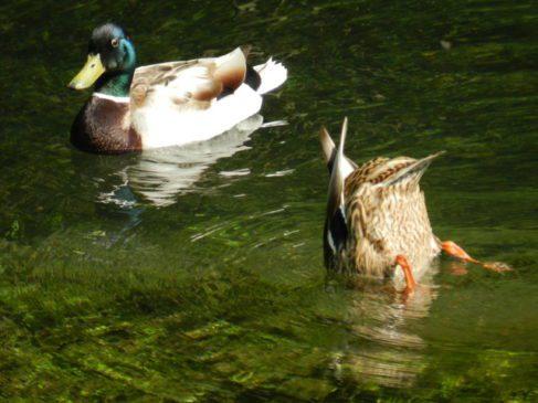 duck phobia strange weird unusual