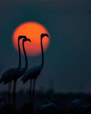 bhigwan bird sanctury